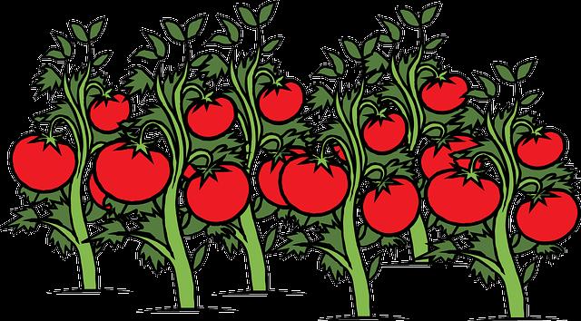 El reino de los mil campos de tomates